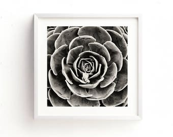 black and white photograph, succulent print, black and white desert print, nature photography, modern decor, echeveria photo, dorm decor