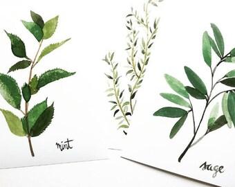 Herbal Print Set (3 prints)