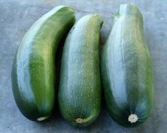 Black Beauty Zucchini Summer Squash Seeds Non-GMO Naturally Grown Open Pollinated Heirloom Gardening