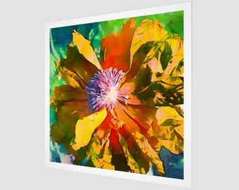 Golden - Poppy Series No.1 Fine Art Print