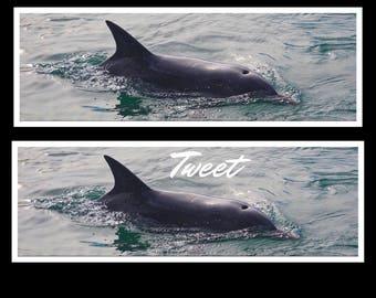Dolphin Twitter Header