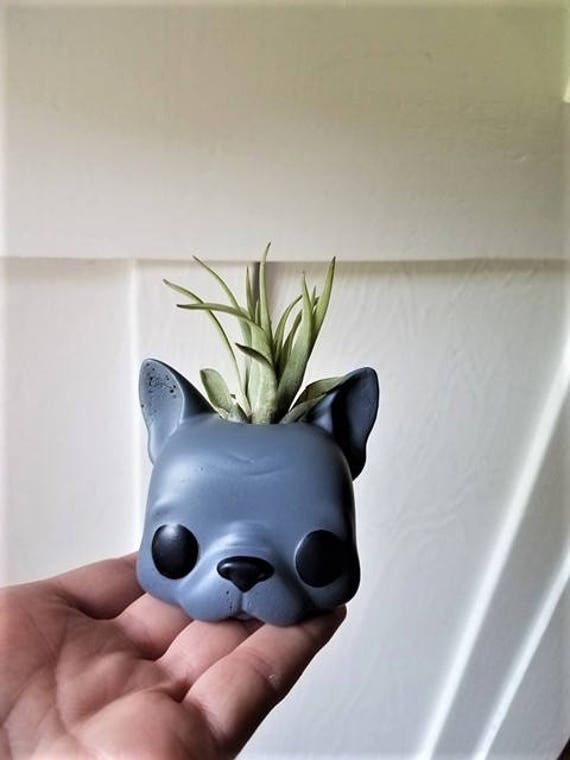 French Bulldog air plant holder, Frenchie gift, planter with plant, Bulldog gift, Funko inspired