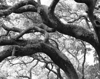 Tree Photography-Spanish Moss Photography-Large Wall Art-Fine Art Print-Black & White Photo-Surreal-Nature Photography-Tree Branches