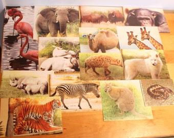 Safari animal pictures,safari pictures,Scrapbooking safari animal picture pack supplies,B-40,scrapbooking supplies,lion,elephant,zebra,hyena