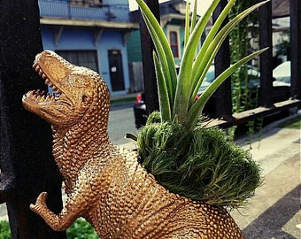 Gold T-Rex Air Plant Container with Live Plant
