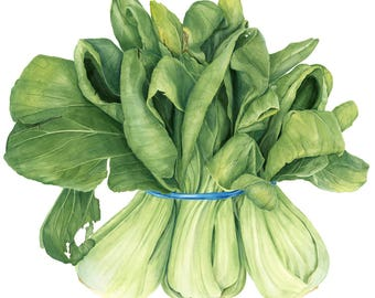 Botanical Vegetable Art Print - Bok choy Watercolor Painting by Sally Jacobs - Restaurant Wall Décor