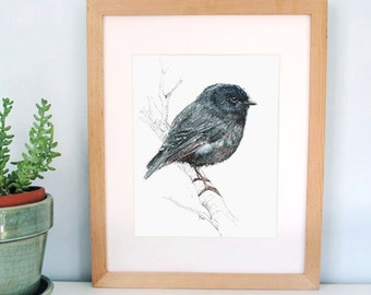 New Zealand native bird Black Robin, illustrated Large print, from original watercolor and ink painting artwork, Wild life wall art
