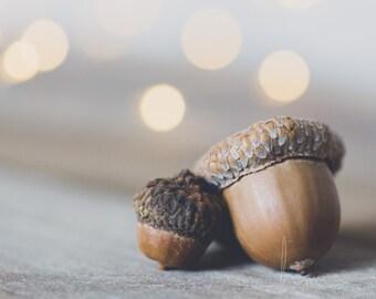 acorn photograph, pair of acorns, lean on me, friendship companions love, home wall art, nature photo, nursery art, playroom decor
