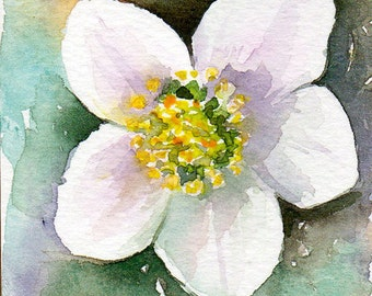 Winter rose aceo, original watercol, Miniature art, Christmas rose, lenten rose, white flowers, Flower art, Floral art, hellebores Aceo