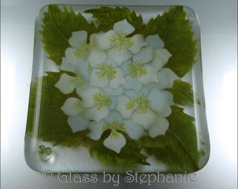 HYDRANGEA COASTER - WHITE – Hand painted and Fused Glass Coaster - by Stephanie Gough sra fhfteam leteam