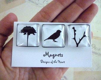 Black and White Birds - Square Glass Magnet set