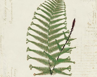 Vintage Fern on French Ephemera Print 8x10 P156