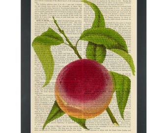 Peach vintage botanical drawing Dictionary Art Print