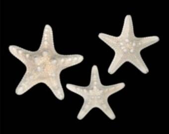 Bleached White Knobby Starfish (Small)  (5 starfish)