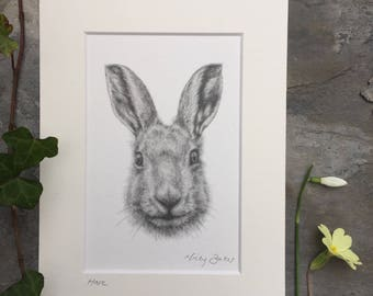 Spring Hare mounted print