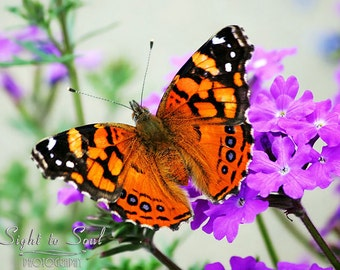 Butterfly Photography, nature photo, garden photography, butterfly on flowers, fine art print