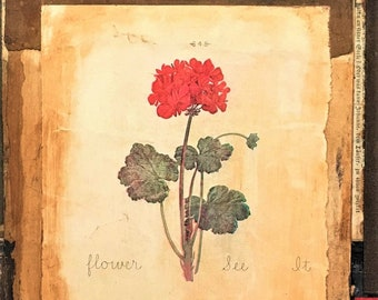 GERANIUM Print of original collage signed limited edition