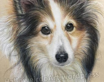 Custom Colored Pencil Pet Drawing
