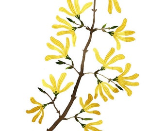 Forsythie Zweig drucken, botanische Drucke, pflanzlichen, Blumen-Muster, Giclée Kunstdruck, Frühling Blumen Abbildung, Aquarell