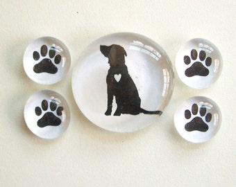 Lab Love- Set of 5 Glass Magnets