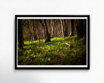 Fine Art Poster Print: Finding Peace ---- wall art - photography - woods - forest - green - calm- quiet - nature love - nature - light
