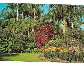 Vintage Florida Chrome Postcard St Petersburg Sunken Gardens Infinite Array of Colors Flowers Palm Trees USED