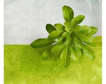Pole Mexique (Nature Photography - Fine Art Print - Floral- Leaves - Botanical - Macro - Monochromatic - Wall Art  - Color Block - Green)
