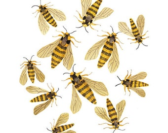 Hornisse Motten drucken, Drucken Bienen, Giclee Kunstdruck, Aquarell, Aquarell print