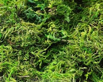 Forest Moss for Miniature Garden, Fairy Garden
