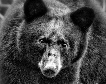 Black Bear, Black & White, Bear photography, Nature photography, wildlife photography, Wall art, Bear wall art, Cabin art, Art