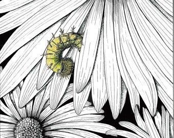 Painted Lady Caterpillar and Gerbera Daisies Prints