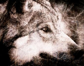 Wolf Wall Art - Wildlife Monochrome - Sepia Textured Home Decor - Fine Art Animal Photography Print