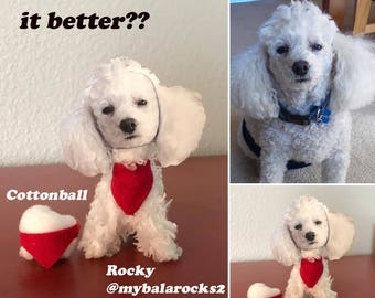 Dog Lover Gift- A Personalized Pet -Poodle Dog Whoodle Yorkipoo Morkie
