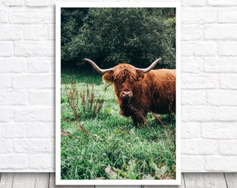 Highland Cow Print, Cow Picture, Digital Photo Print, Digital Print, Cow Art, Cow Photo Print, Scottish Cattle Print, Scottish Cow Printable
