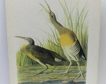 vintage Clapper Rail image,bird image,vintage bird image,Clapper Rail bird,vintage birds,home decor,man cave,man gift,