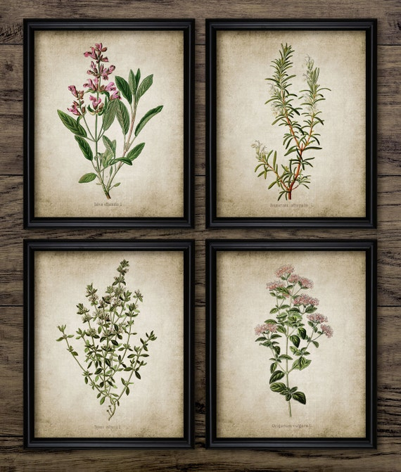 Herb Print Set of 4 - Oregano - Rosemary - Sage - Thyme