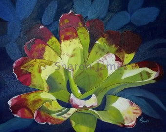 "Bromeliad an Original Oil Painting, by Sharon James, 16"" x 20"""