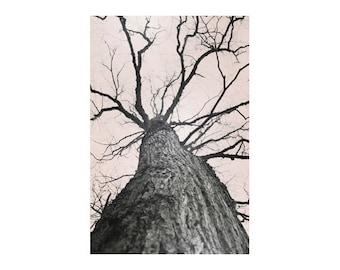 Neutral Art, Forest Art, Large Tree Art, Tree Photography Prints, Vertical Wall Art Prints, Neutral Wall Art, Linden Tree