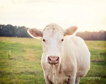 cow photography, rustic home decor, farm animal, farm photography, farm nursery art, country wall art, animal photography, farmhouse The Cow