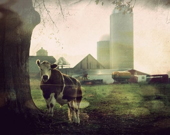 Cow Decor, Cow Art, Farm Decor, Midwest Art, Home Decor, Rustic Decor, Large Wall Art, Moooo