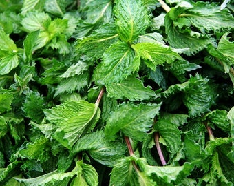 Spearmint Medicinal Herb Heirloom  Garden Seeds Non-GMO 100+ Seeds Naturally Grown Open Pollinated Gardening