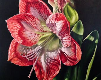Light of the World #1 – Red and White Amaryllis
