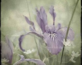 Photographie de fleur IRIS, violet et vert wall art, shabby chic inspiration décor à la maison, chambre de bébé, printemps