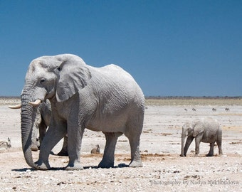 Baby Elephant with Father - photo print 8x10 inches (20x25cm) - When I Grow Up, I Want to be Like Daddy