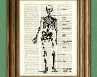 Human SKELETON DIAGRAM awesome upcycled vintage dictionary page book art print