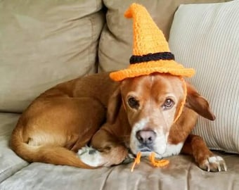 Dog witch hat//dog witch costume//pet hat//pet costume//Halloween costume