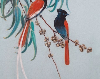 Realistic BIRD ARTWORK Print 'Paradise Flycatchers' Chalk Pastel DRAWING Couples Gift wall art Nature African seed brown Green black orange