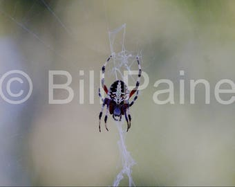 Spider and web - Nature photography - Digital download - color photography - Nature art - spider photography