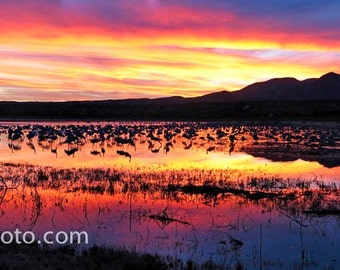 Sunset with Sandhill Cranes Bosque del Apache NWR, NM Color Photograph