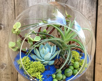 8 Inch Hanging Glass Air Plant Terrarium